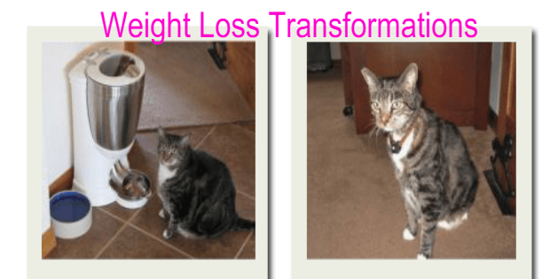 weight loss tansformations